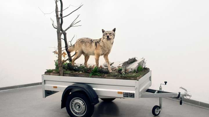 Mark Dion: «Mobile Wilderness Unit», 2006