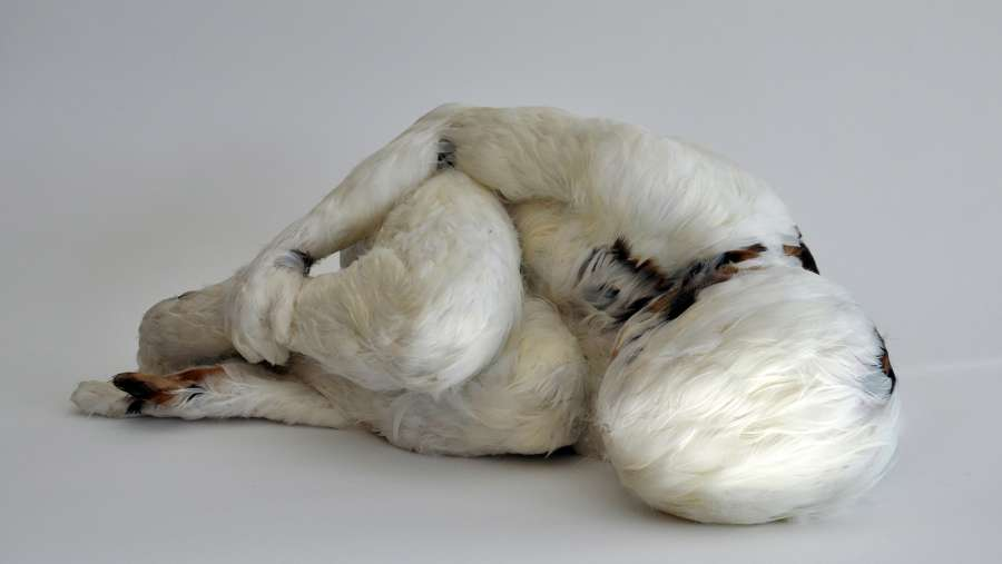 Lucy Glendinning: «Feather Child 1», 2011